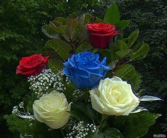 Kohányi Társaság, kék rózsa