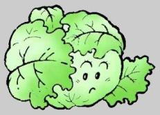 Káposzta (Cabbage) / freemicrosoftclipart.blogspot.com