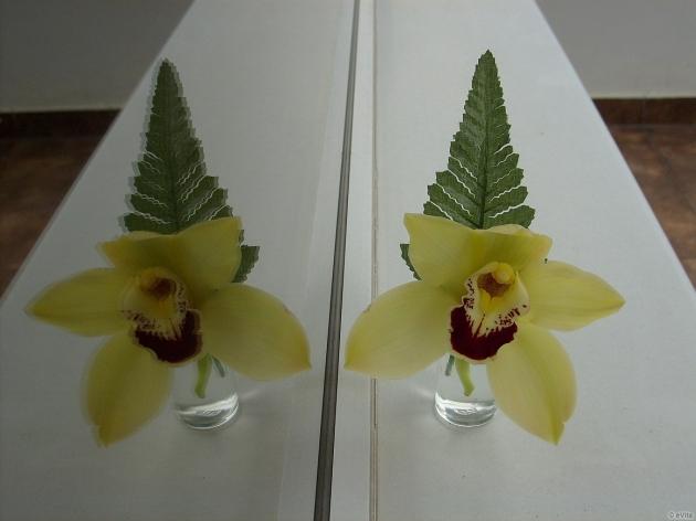 Nőnap & Orchidea